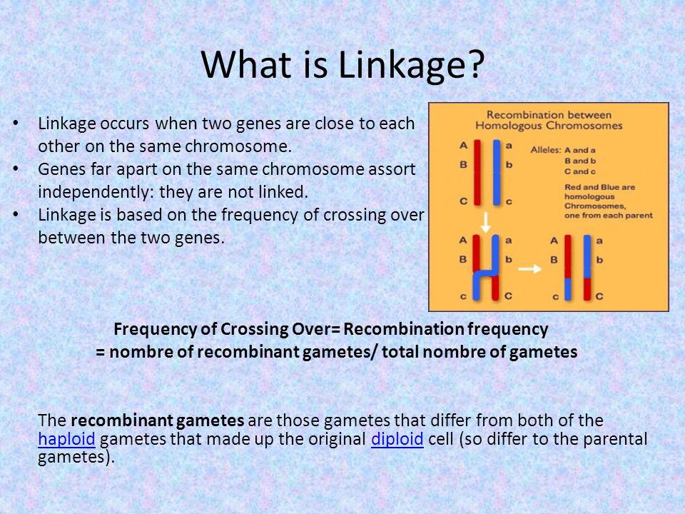 What is Linkage Linkage occurs when two genes are close to each