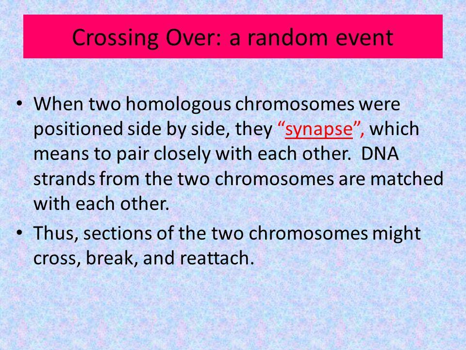 Crossing Over: a random event