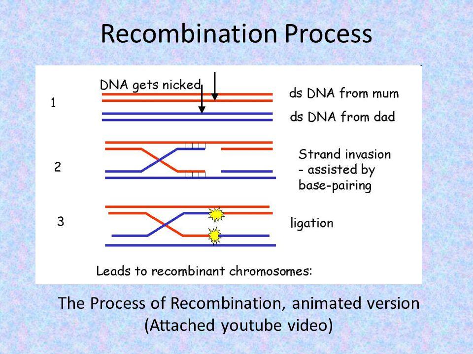 Recombination Process