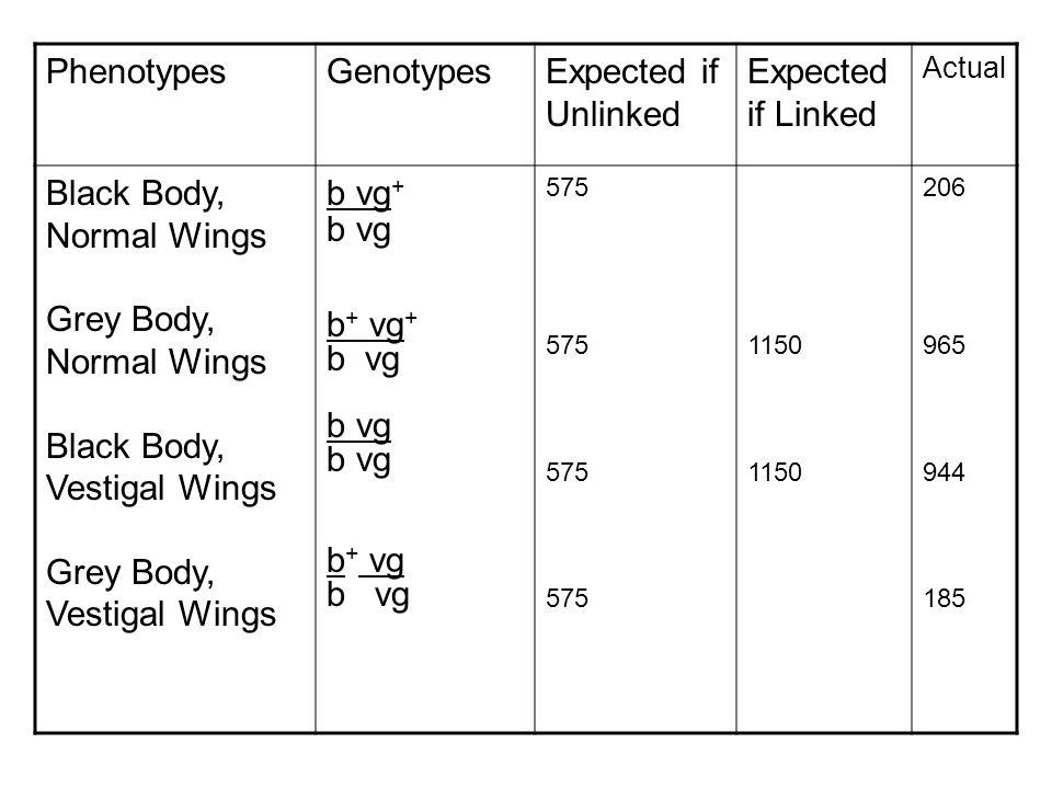 Black Body, Normal Wings