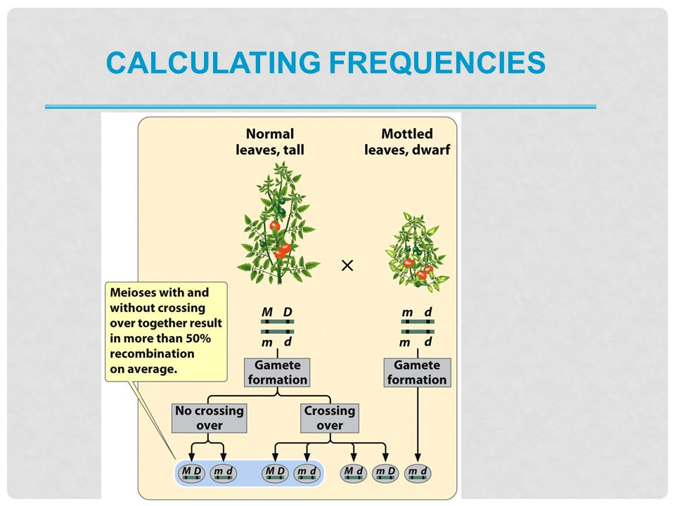 Calculating frequencies