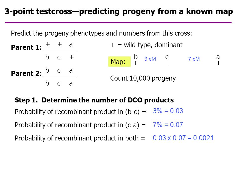 3-point testcross—predicting progeny from a known map
