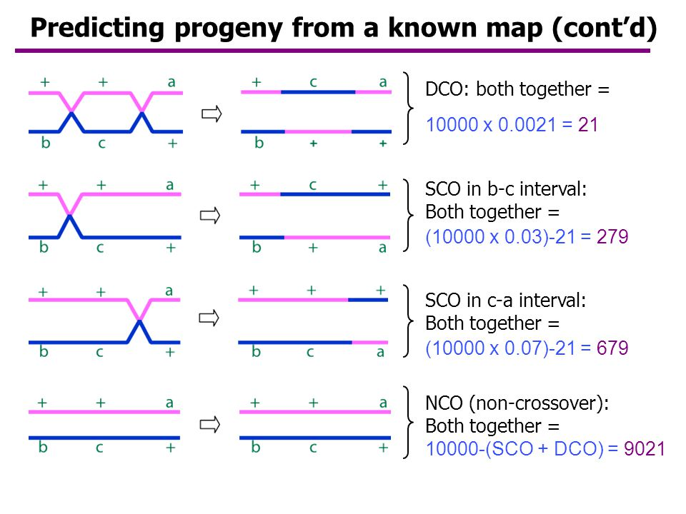 Predicting progeny from a known map (cont'd)