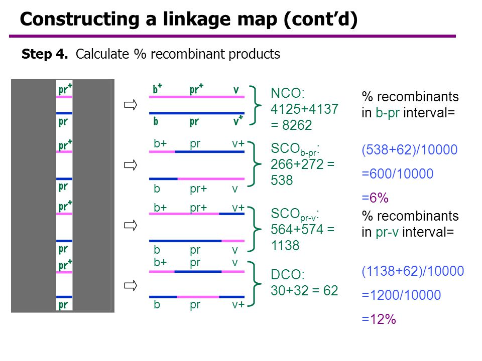 Constructing a linkage map (cont'd)
