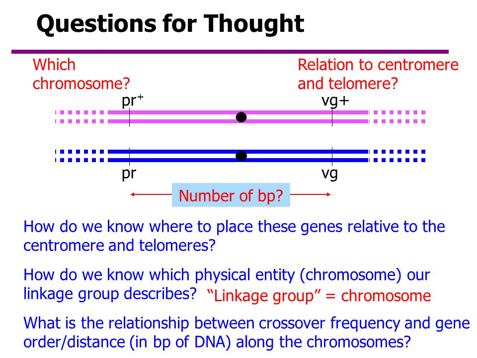 Questions for Thought Which chromosome