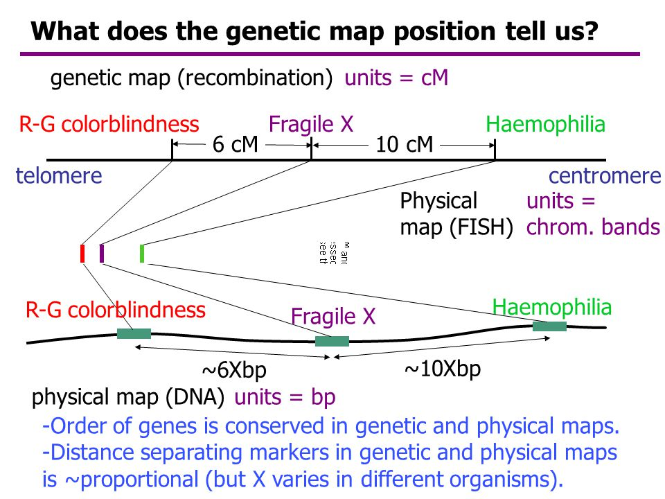What does the genetic map position tell us