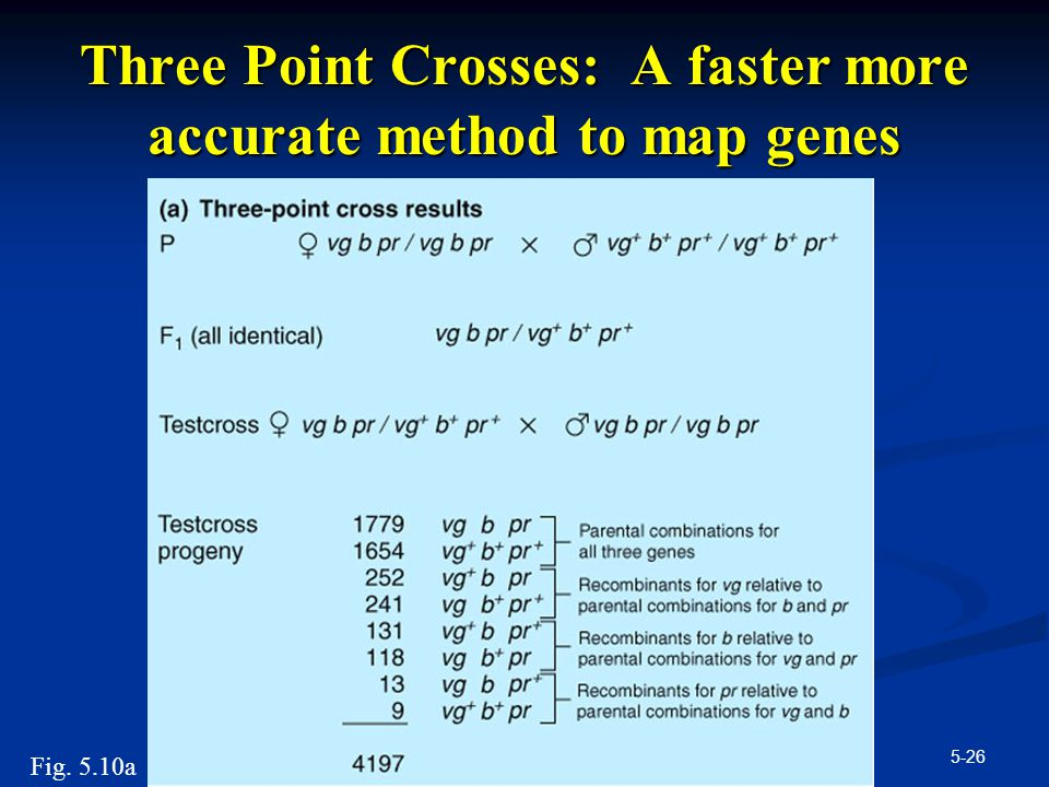 Three Point Crosses: A faster more accurate method to map genes