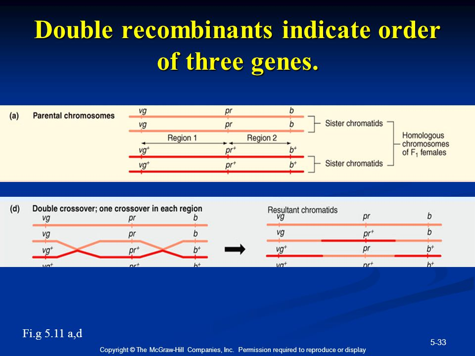 Double recombinants indicate order of three genes.