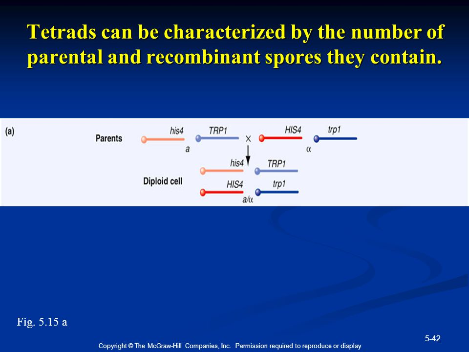 Tetrads can be characterized by the number of parental and recombinant spores they contain.