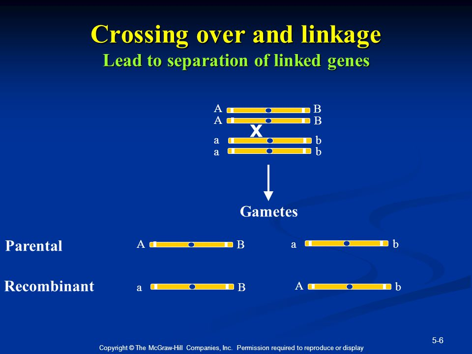 Crossing over and linkage Lead to separation of linked genes