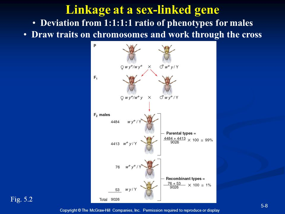 Linkage at a sex-linked gene