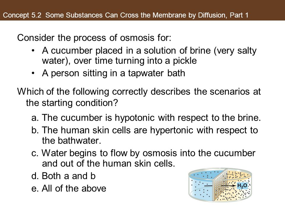 Consider the process of osmosis for: