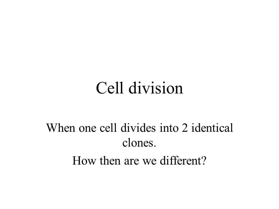 Cell division When one cell divides into 2 identical clones.