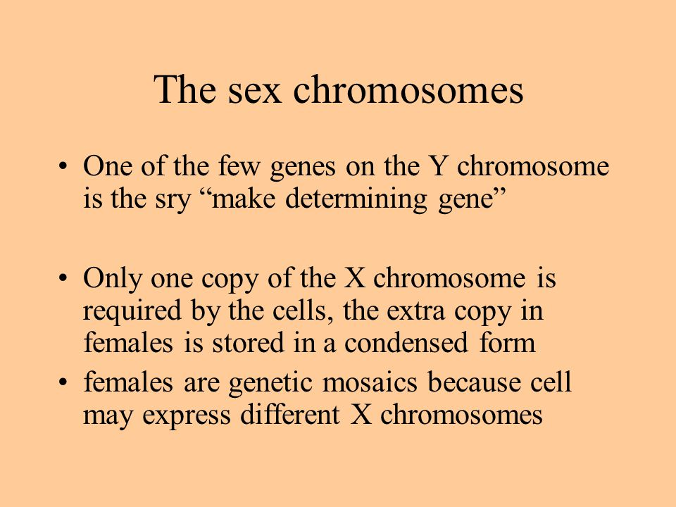 The sex chromosomes One of the few genes on the Y chromosome is the sry make determining gene