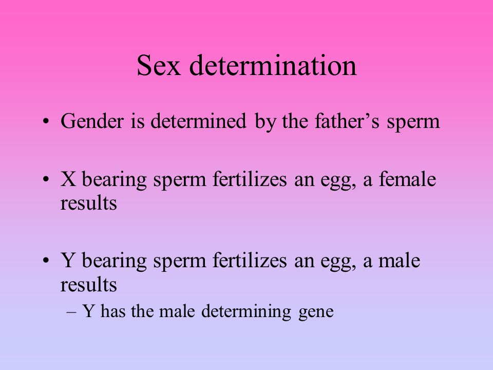 Sex determination Gender is determined by the father's sperm