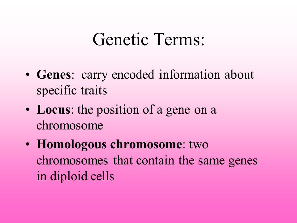 Genetic Terms: Genes: carry encoded information about specific traits