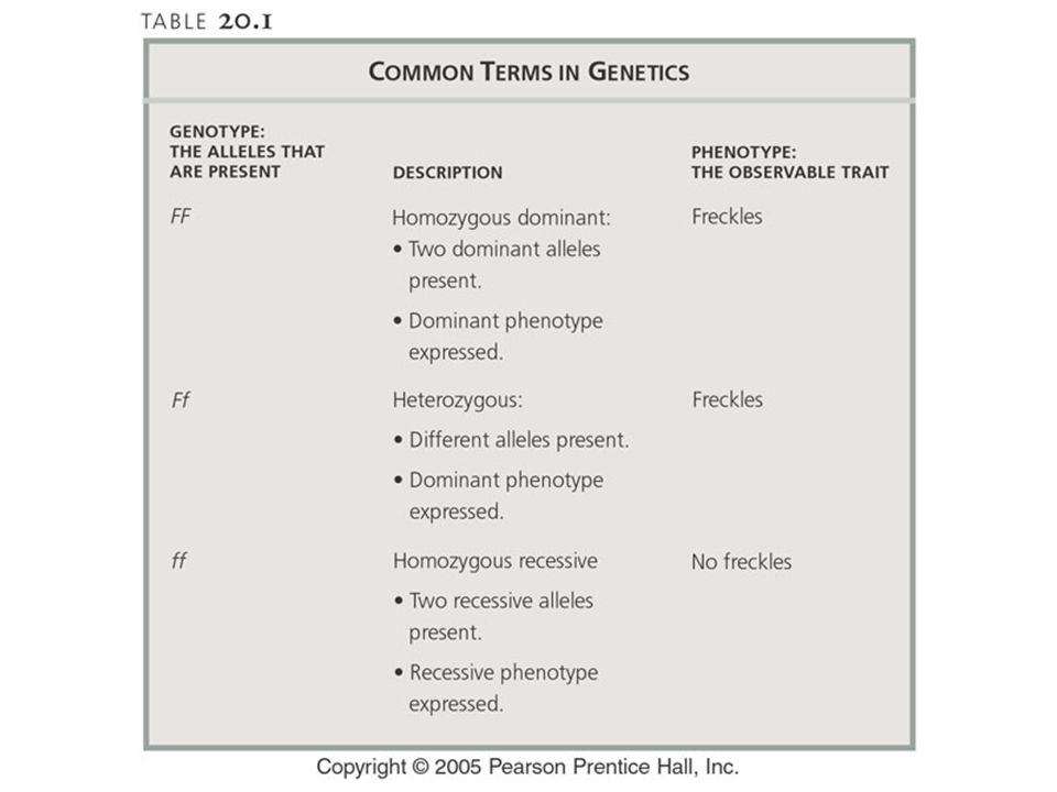 Table: 20-T01 Title: Common terms in genetics. Caption: