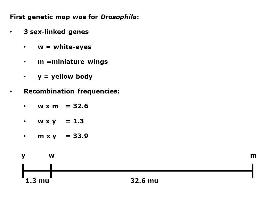 First genetic map was for Drosophila: