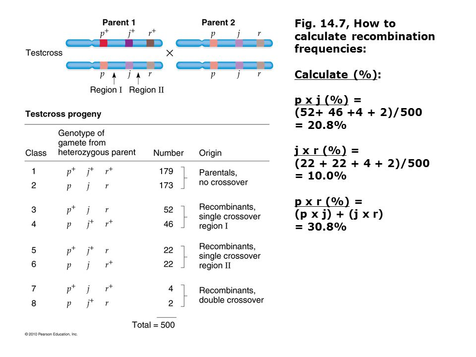 Fig. 14.7, How to calculate recombination frequencies: