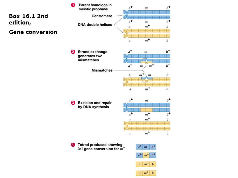 Box 16.1 2nd edition, Gene conversion