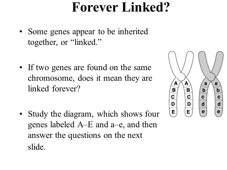 Forever Linked Section 11-5. Some genes appear to be inherited together, or linked.