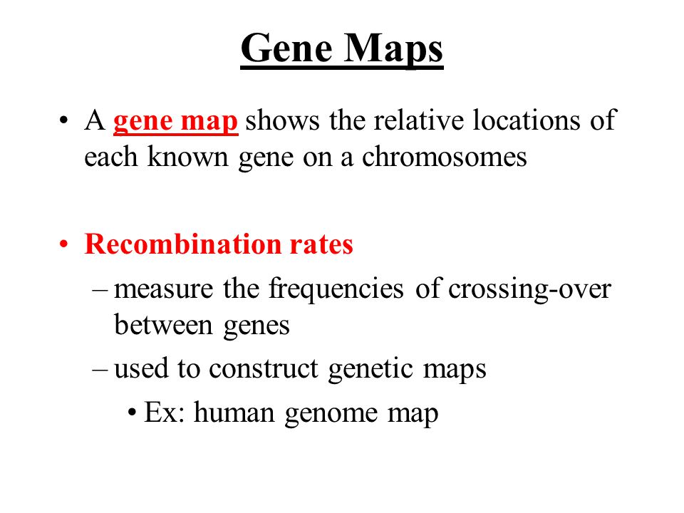 Gene Maps A gene map shows the relative locations of each known gene on a chromosomes. Recombination rates.