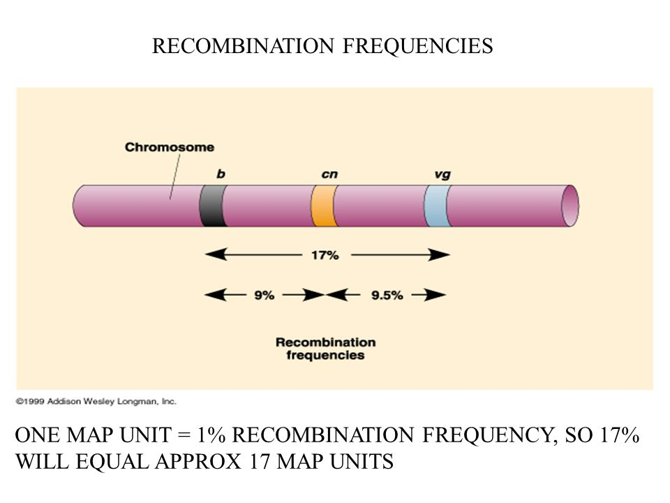 RECOMBINATION FREQUENCIES