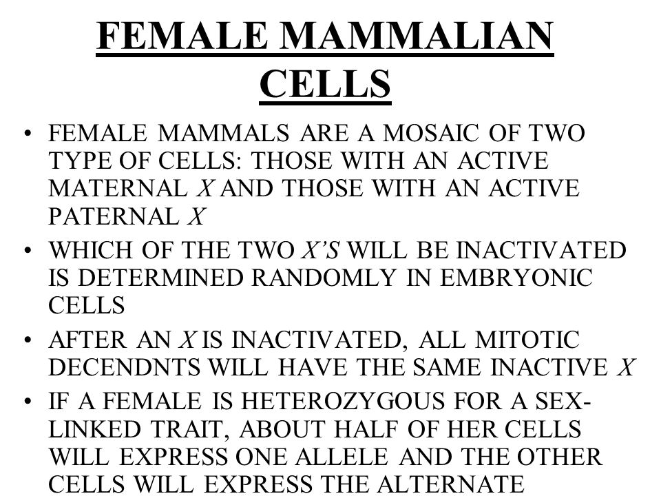 FEMALE MAMMALIAN CELLS