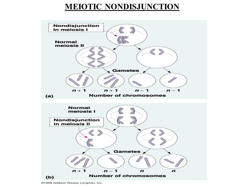 MEIOTIC NONDISJUNCTION
