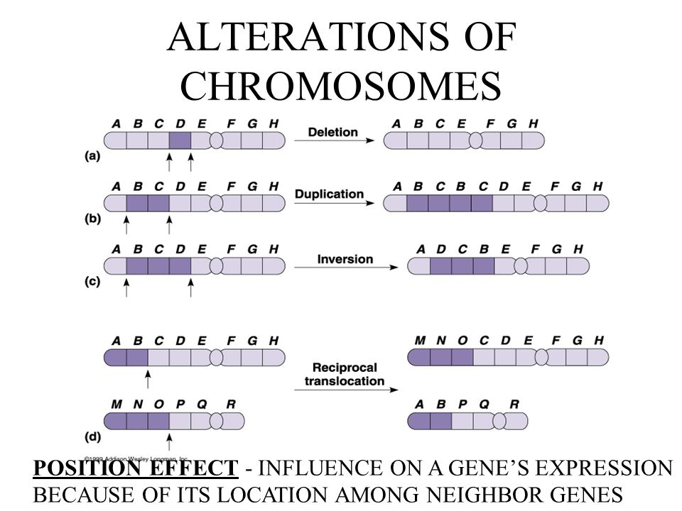 ALTERATIONS OF CHROMOSOMES