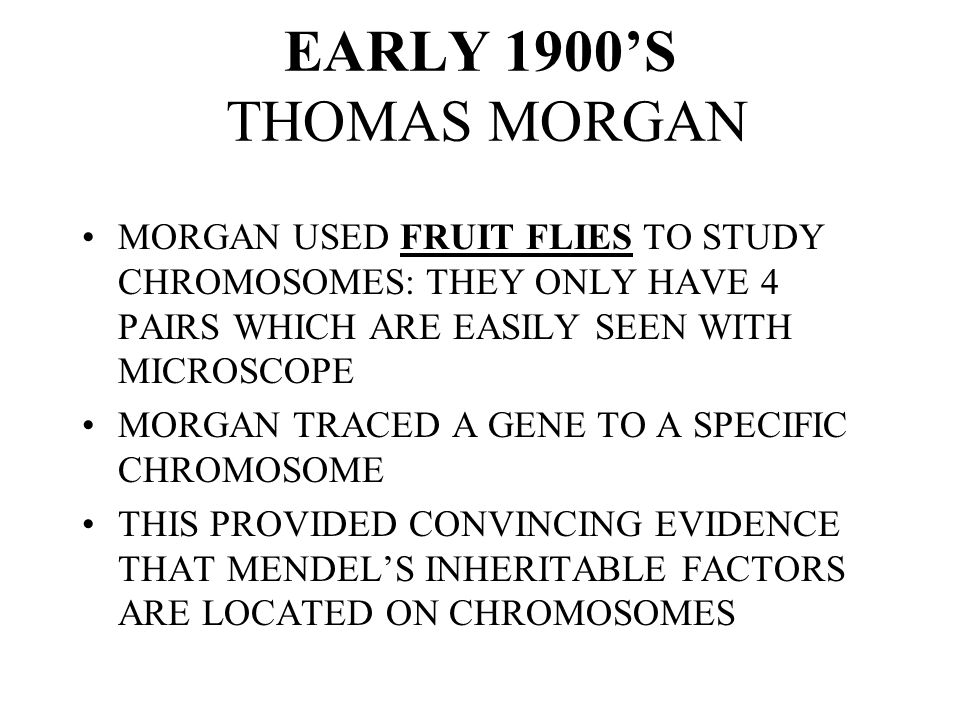 EARLY 1900'S THOMAS MORGAN MORGAN USED FRUIT FLIES TO STUDY CHROMOSOMES: THEY ONLY HAVE 4 PAIRS WHICH ARE EASILY SEEN WITH MICROSCOPE.