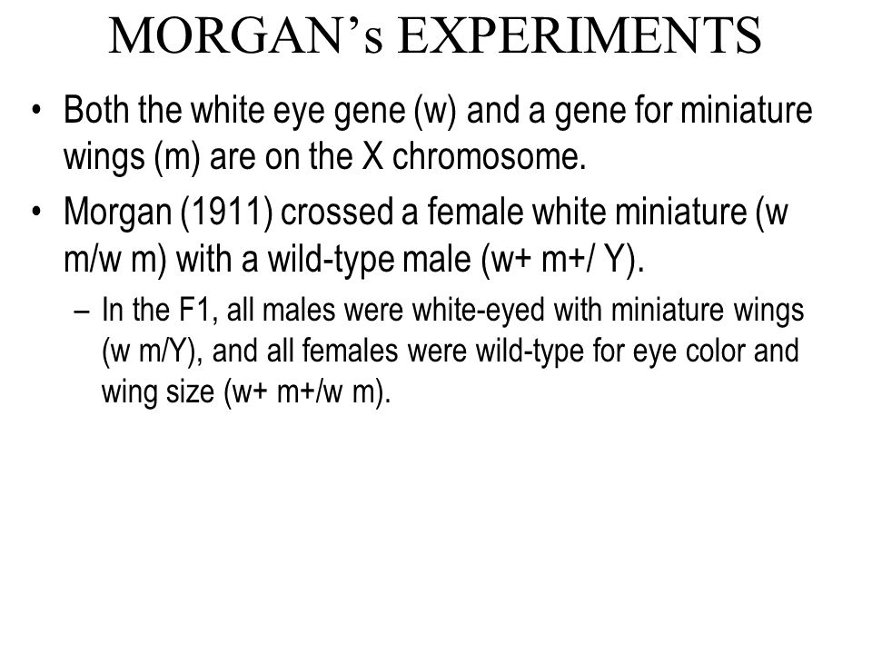 MORGAN's EXPERIMENTS Both the white eye gene (w) and a gene for miniature wings (m) are on the X chromosome.