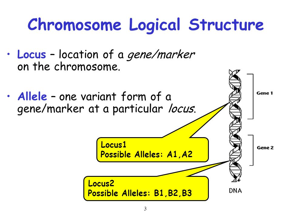 Chromosome Logical Structure