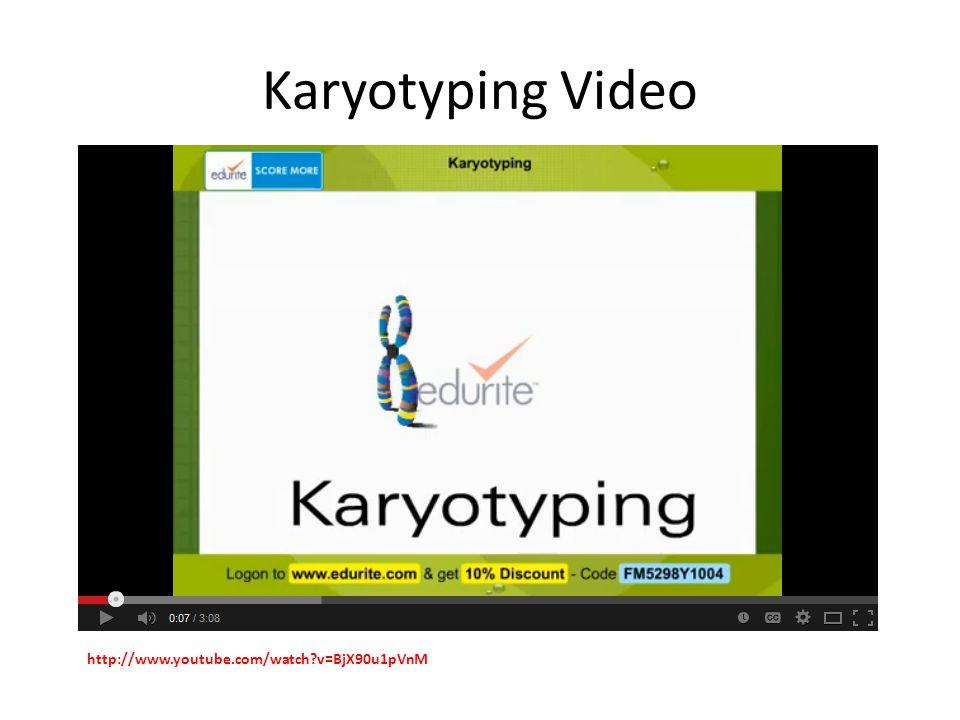 Karyotyping Video http://www.youtube.com/watch v=BjX90u1pVnM