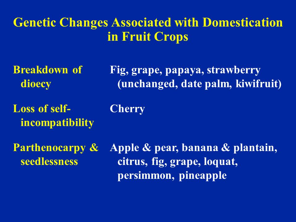 Genetic Changes Associated with Domestication in Fruit Crops