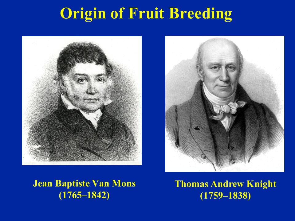 Origin of Fruit Breeding