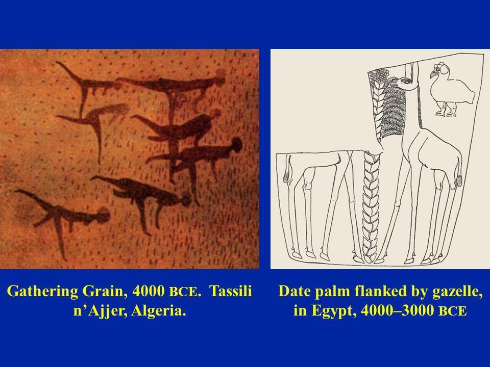 Gathering Grain, 4000 BCE. Tassili n'Ajjer, Algeria.