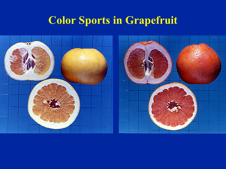 Color Sports in Grapefruit