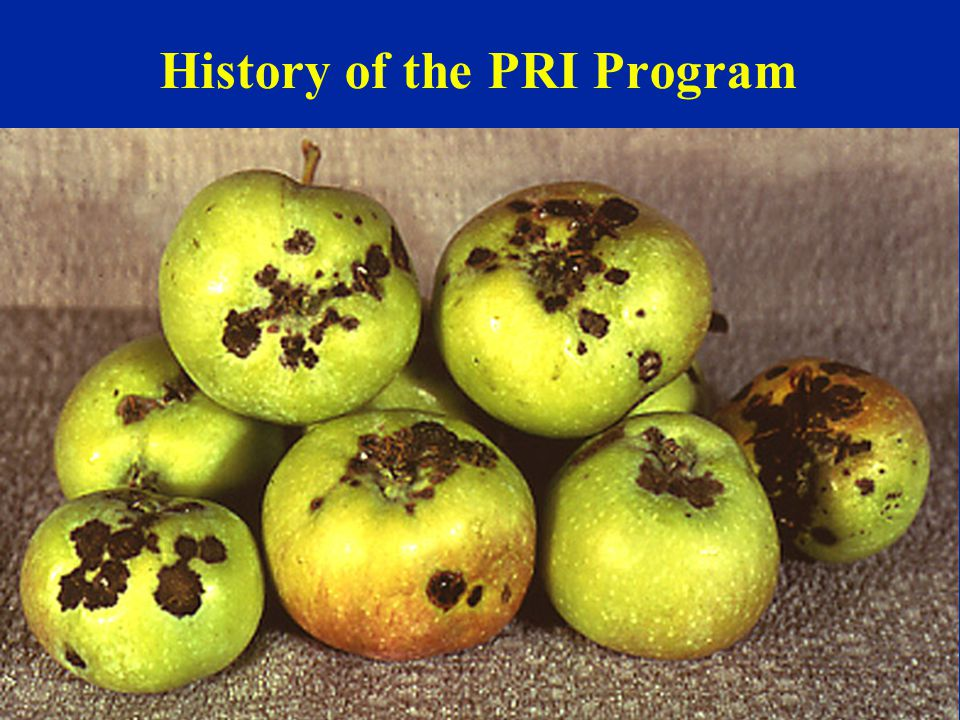 History of the PRI Program