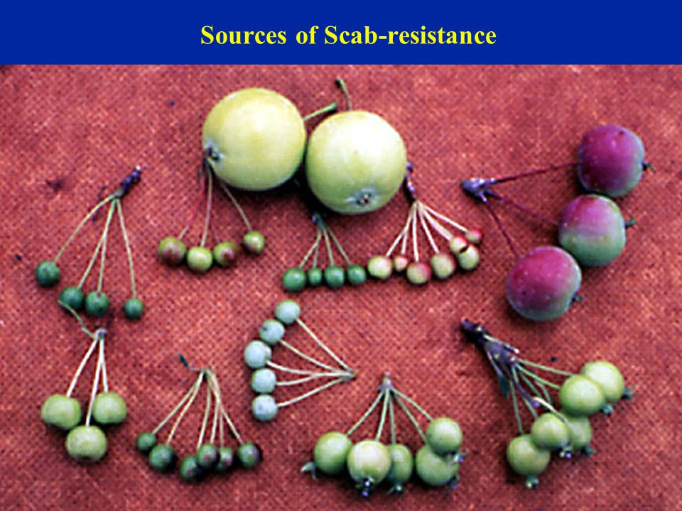 Sources of Scab-resistance