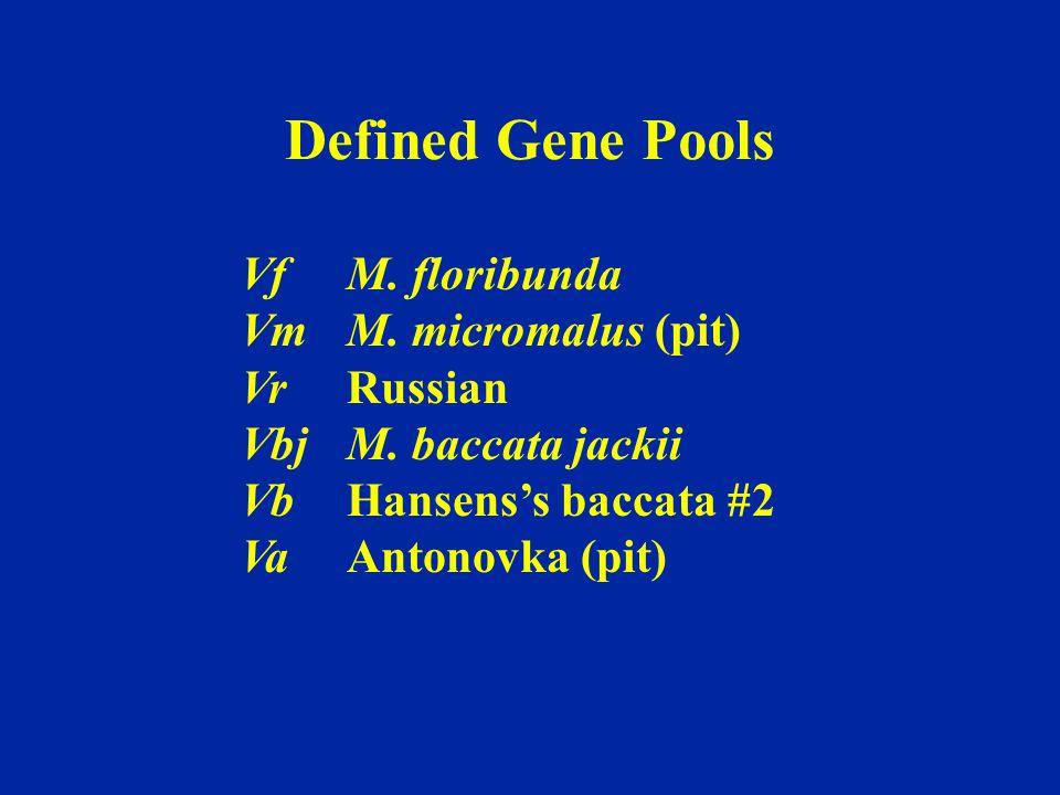 Defined Gene Pools Vf M. floribunda Vm M. micromalus (pit) Vr Russian
