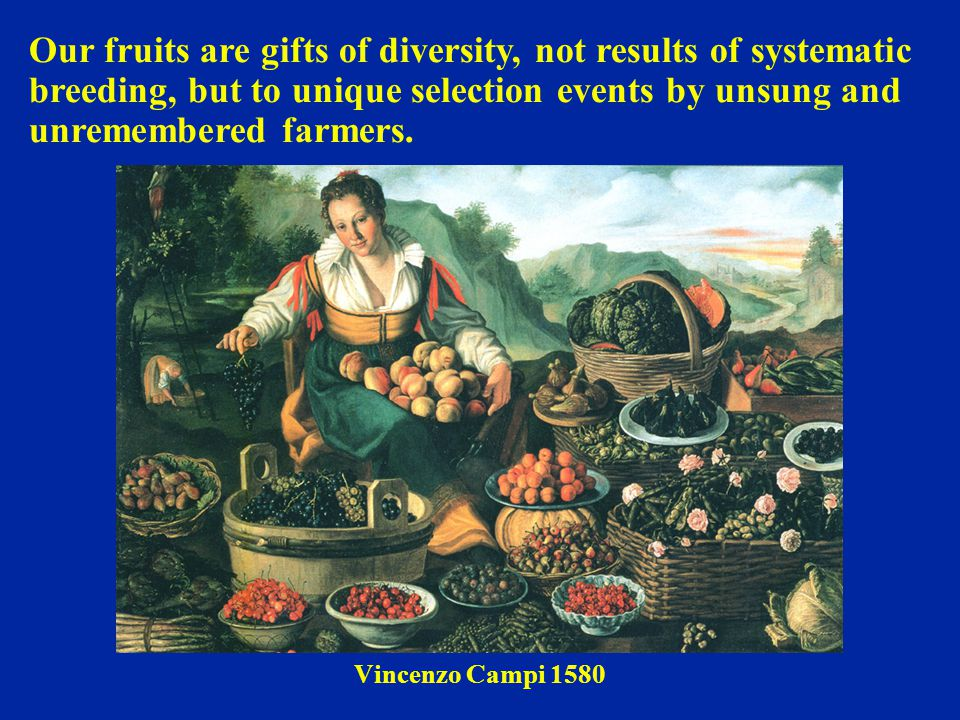 Our fruits are gifts of diversity, not results of systematic breeding, but to unique selection events by unsung and unremembered farmers.