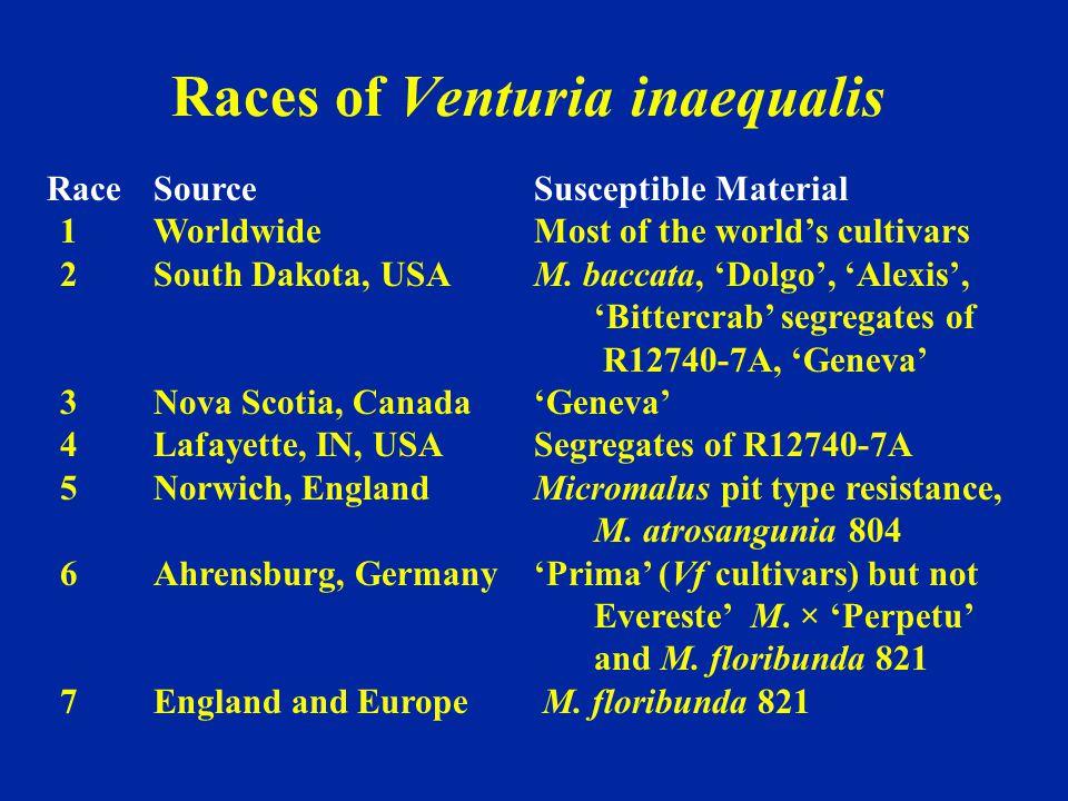 Races of Venturia inaequalis