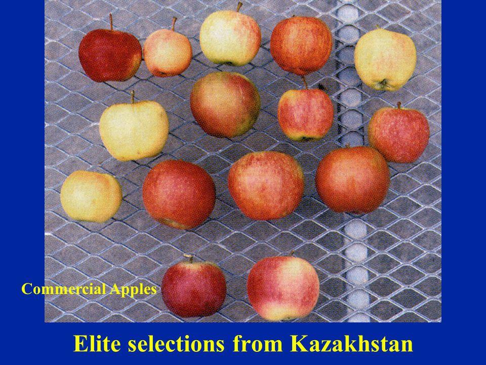 Elite selections from Kazakhstan