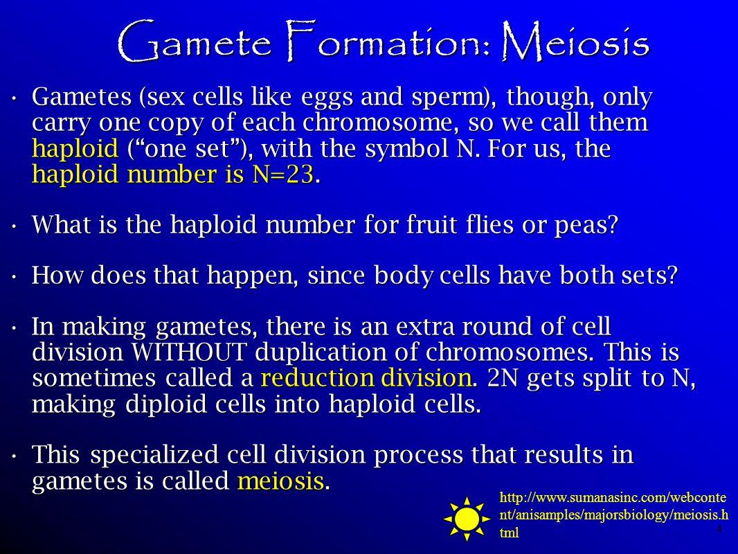 Gamete Formation: Meiosis
