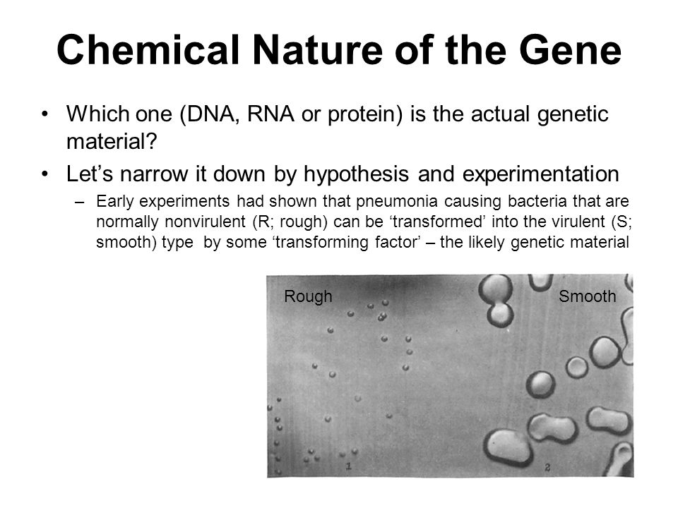 Chemical Nature of the Gene