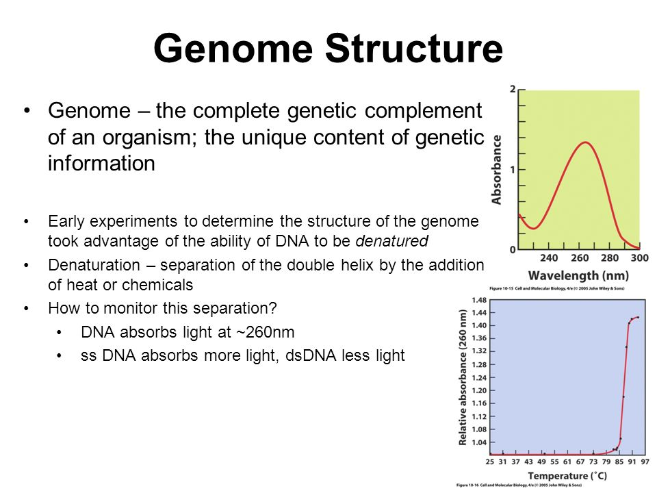 Genome Structure Genome – the complete genetic complement of an organism; the unique content of genetic information.