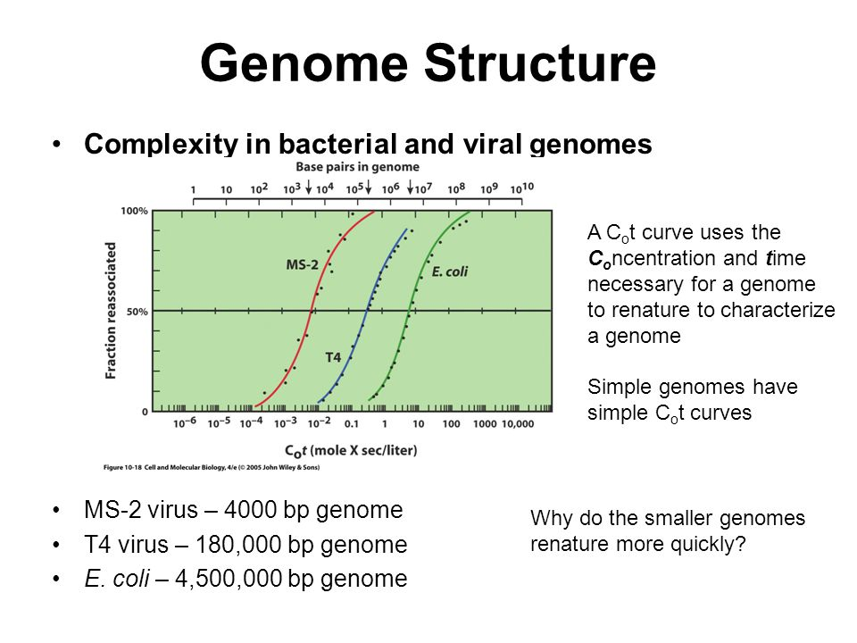Genome Structure Complexity in bacterial and viral genomes