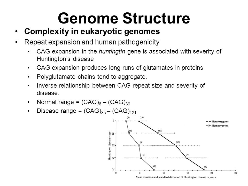 Genome Structure Complexity in eukaryotic genomes