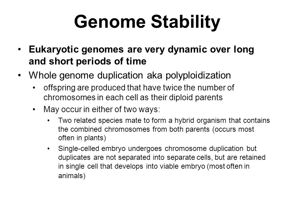 Genome Stability Eukaryotic genomes are very dynamic over long and short periods of time. Whole genome duplication aka polyploidization.